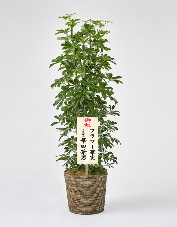 観葉植物木札